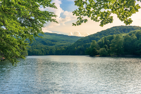lake among the beech forest in summer. beautiful nature scenery in the evening Stock Photo - 117778379
