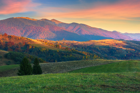 beautiful autumn scenery in mountains at sunset. red clouds on the sky, blue shade in the mountains, grassy green meadow. wonderful carpathian countryside