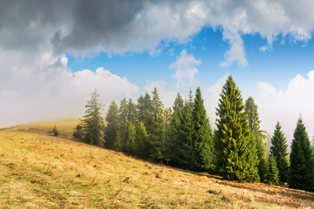 coniferous forest on the hillside in fog. spruce trees down the hill, grassy meadow with weathered grass. beautiful sunny autumn weather with cloudy sky Stock Photo