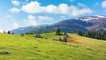 beautiful springtime landscape in mountains. spruce trees on the grassy hills. spots of snow on the tops of distant ridge. sunny weather with fluffy clouds on the blue sky. Stock Photo - 119512704