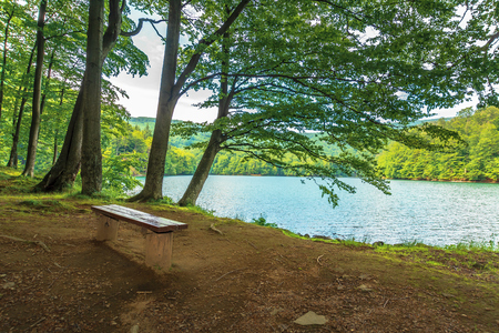 bench near in forest on the shore mountain lake. beech trees. sunny summer afternoon Stock Photo