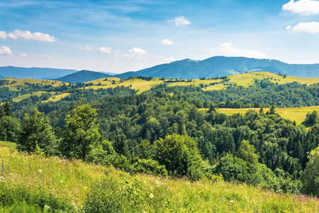 mountainous countryside on a hot summer afternoon. trees on grassy slope. meadows on the distant rolling hills. sunny weather with fleecy clouds on a deep blue sky