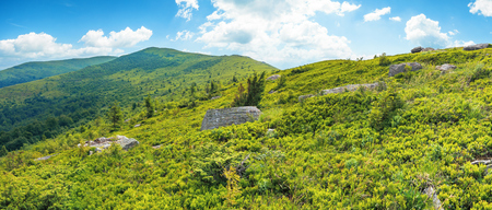 panorama of grassy alpine meadow in mountains. trees and rocks on the slopes. summit in the distance. sky with fluffy clouds. sunny weather Stock Photo