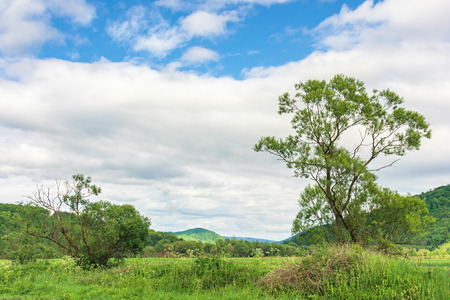 summer countryside in mountains. trees on a rural field in mountains. cloudy morning sky. hill in the distance. Stock Photo