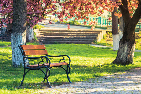 bench in the city park among pink cherry blossom. beautiful urban scenery in springtime. paved walking pathway. warm morning light