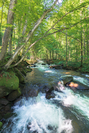 cascades on the forest creek in springtime. beautiful nature scenery. river path come from the distance. sunny weather. tall trees on the shore Stock Photo