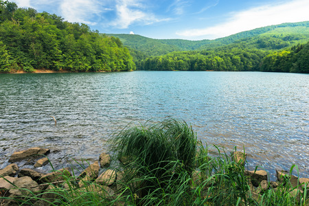 beautiful summer scenery near the mountain lake. beech forest and rocks among tall grass on the shore. sunny and windy weather and crystal clear water Stock Photo - 119823598