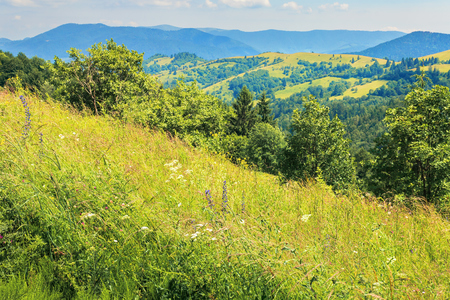 mountainous countryside on a hot summer afternoon. grassy slope with wild herbs and trees. meadows on the distant rolling hills. sunny weather Stock Photo - 119829480