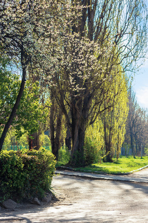 park in blossom. beautiful urban scenery in springtime Stock Photo - 119829483