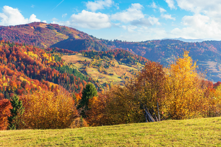 autumn countryside in mountains. alpine meadows and forested rolling hills. beautiful carpathian landscape in the afternoon. vivid autumn colors and bright blue sky with fluffy clouds