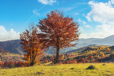 autumn countryside in mountains. trees in red foliage on the edge of a meadows. rural fields on the nearest rolling hills. ridge in the distance. beautiful landscape in afternoon. wonderful weather