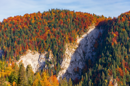 forested mountain with cliff in autumn. beautiful nature scenery in evevning
