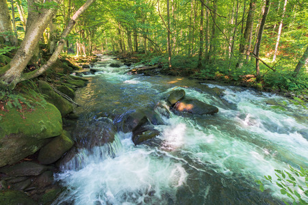 cascades on the forest creek in springtime. beautiful nature scenery. river path come from the distance. sunny weather. trees on a cliff with mossy rocks