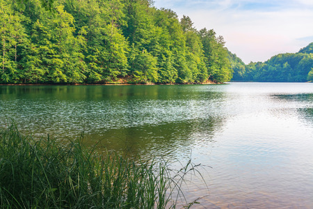 beautiful scenery near the lake among beech forest with grassy shore. calm summer landscape in afternoon. location slovakia, vihorlat. popular travel destination Stock Photo - 119805896