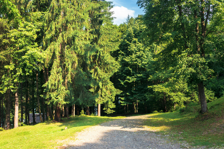 road in to the deep spruce forest. wonderful sunny weather. summer tourism concept Stock Photo