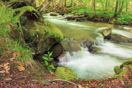 bank of the forest river. beautiful summer nature scenery. trees and mossy boulders on the shore of a stream. long exposure Stock Photo