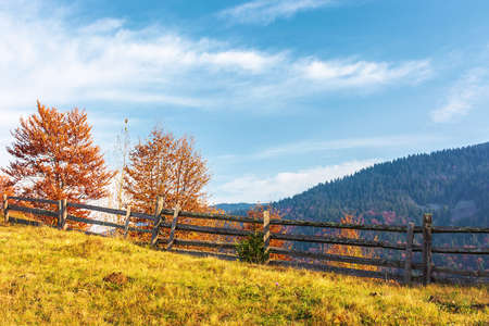 autumn countryside scenery in mountains. wonderful sunny weather. trees in red foliage behind the wooden fence on hillside