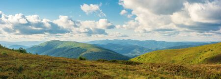 beautiful summer landscape in mountains. grassy alpine meadows in evening light. wonderful weather with fluffy clouds