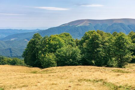 primeval beech forest in mountains. meadows in weathered grass. range of ridges in the distance. wonderful carpathian summer landscape. fine weather in august. Stock Photo - 127959367