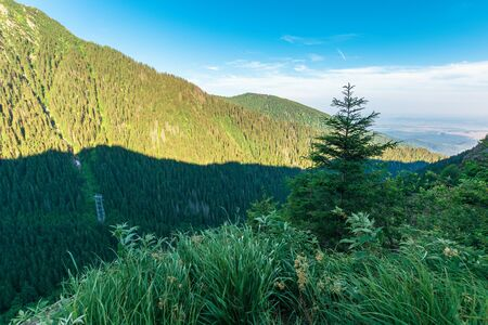coniferous trees on the rocky slope. wonderful nature scenery of fagaras mountains on summer morning. discover romania concept