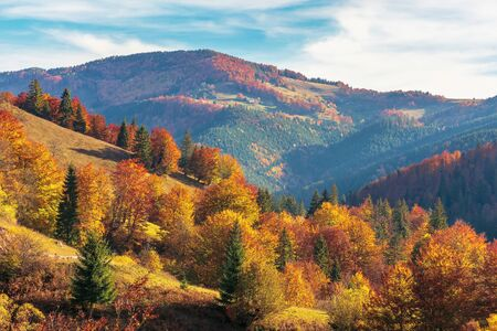 beautiful autumn afternoon in mountains. trees on the edge of a hill in fall colors. wonderful countryside of romania on a sunny weather in evening