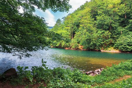 See inmitten des Buchenwaldes. schöne sommerlandschaft im vihorlat-gebirge, slowakei. wunderbares Ziel für einen Wochenendurlaub