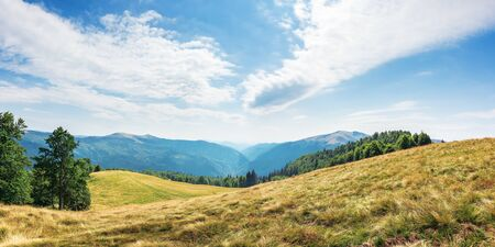 wonderful mountain landscape in late summer. alpine meadow with weathered grass. beech forest at the edge of a hill. beautiful panorama with distant valley and clouds on the blue sky