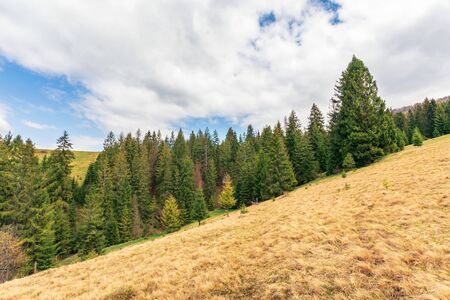 wonderful countryside in springtime. row of spruce trees on a hill. meadow with weathered grass. sunny weather with fluffy clouds on the sky Stock Photo