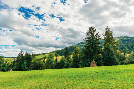 rural area in carpathian mountains. cloudy september weather. row of threes behid the green grassy meadow with haystacks. wonderful countryside scenery