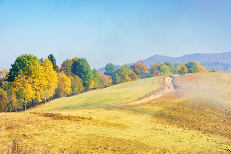 early autumn countryside scenery in foggy weather. row of trees in colorful foliage on the hill along the road. wonderful bright morning background in mountains. Stock Photo