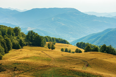 beautiful countryside landscape in late summer. dirt road downhill through meadow. beautiful area on the slope among beech forest. wonderful scenery on august afternoon Stock Photo