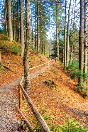 footpath through autumn forest in late autumn. wooden fence along the edge. beautiful nature background of october