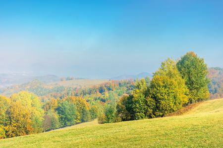 early autumn countryside scenery in foggy weather. beech trees in colorful foliage on the grassy hill. wonderful bright morning background in mountains.