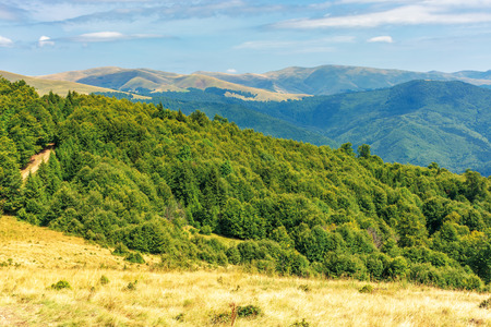 primeval beech forests of carpathian mountains. beautiful late summer landscape in afternoon. svydovets ridge in the distance. weathered grass on hills and meadows