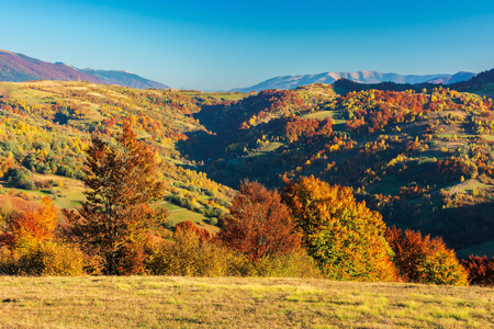 wonderful autumn afternoon in mountains. beautiful countryside scenery with trees in red foliage on the meadow. rural area of carpathians. ridge in the distance. clear blue sky Stock Photo