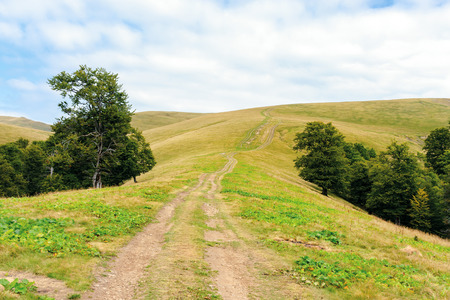 primeval beech forests of carpathian mountains. beautiful late summer landscape in afternoon. country road uphill. weathered grass on slopes and meadows