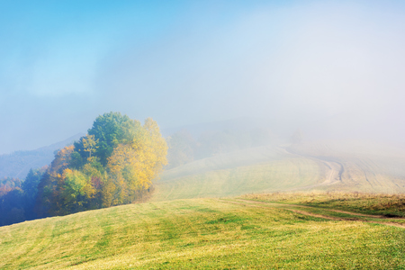 early autumn countryside scenery in foggy weather. trees in colorful foliage on the hill. wonderful bright morning background in mountains.