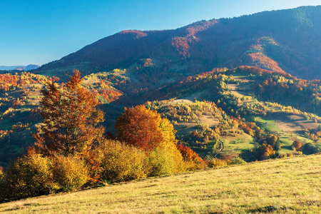 wonderful autumn afternoon in mountains. beautiful countryside scenery with trees in red foliage on the hills; rural area of carpathians. clear blue sky Stock Photo