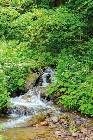 wild stream in the forest shade. beautiful summer nature scenery in the remote woods. rocky bottom of the creek is visible through clear water Stock Photo