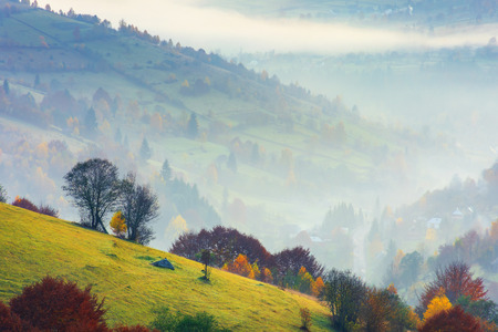 rural background on a foggy dawn in mountains. trees on a grassy slope. village down in the valley. beautiful european landscape in autumn. mysterious weather