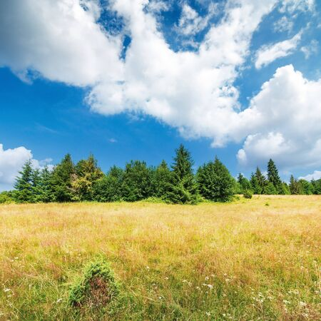 grassy meadow on the edge of the forest. lovely summer scenery on a bright sunny day.  beautiful cloudscape on a blue sky. Stock Photo
