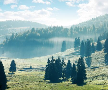 coniferous forest on hills and meadows. foggy afternoon in mountains. bright nature scenery with cloudy sky Stock Photo