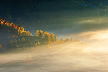 glowing fog at sunrise in mountains. wonderful autumn nature background. mixed forest on near on the hill. colorful nature background. matisesti area of apuseni national park, romania Stock Photo