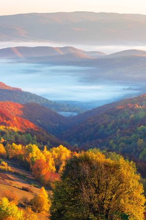 beautiful sunrise in mountains. forest in fall foliage. fog in the distant valley. wonderful sunny weather Stock Photo