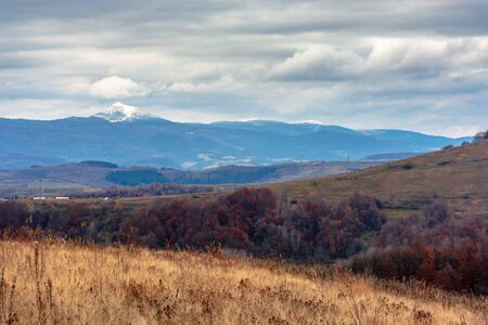 beautiful transcarpathian landscape in november. overcast sky above the meadow with weathered grass in front of a snow capped pikui mountain of carpathian watershed ridge in the distance.