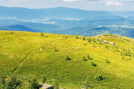 beautiful landscape of runa mountain, ukraine. green landscape on a bright forenoon. ridge in the distance. footpath through meadows of European blueberry also called Vaccinium myrtillus on hills.