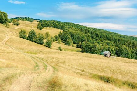 country road winding uphill through meadow. weathered grass on pastures. primeval beech forest on the hill. beautiful rural scenery in summertime with bright blue sky