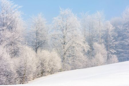 winter scenery with trees in hoarfrost on hillside. hazy weather on a bright sunny morning with clear blue sky Stock Photo