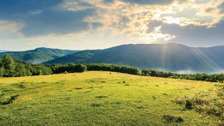 meadow on the hill among the forest. bright summer scenery on a cloudy forenoon. fog start to rise from the valley. mountain ridge in the distance Stock Photo