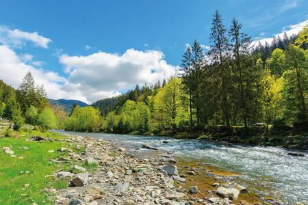 River flows among of a green forest at the foot of the mountain. picturesque nature of Carpathians  on a serene summer day under blue sky Stock Photo